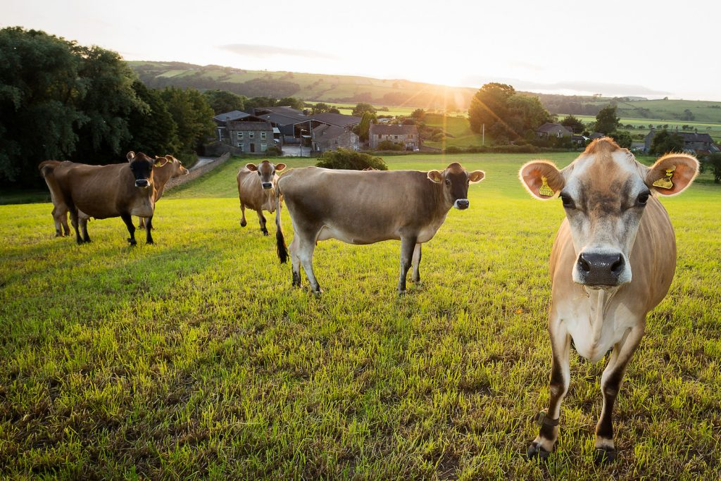 Livestock is an industry